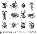 vector, bug, insect 29568246