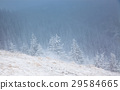 Christmas background with snowy fir trees  29584665