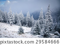 Christmas background with snowy fir trees  29584666