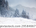 Christmas background with snowy fir trees  29584667