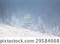 Christmas background with snowy fir trees  29584668