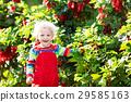 红色 红 黑醋栗 29585163