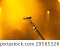 summer music festival 29585326