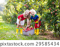 Kids picking apples in fruit garden 29585434