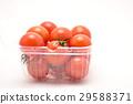 蕃茄 29588371