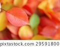 단풍, 가을, 낙엽 29591800