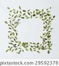 frame, green, leaves 29592376