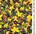 flower 29592853