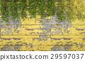 3d rendering ivy vegetation on art wooden wall 29597037