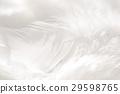 羽毛 29598765
