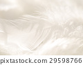 羽毛 29598766