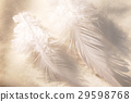 羽毛 29598768