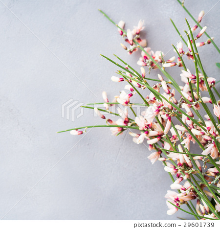 Spring easter broom floral minimal background 29601739