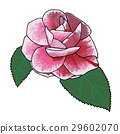 Camellia rose hand drawn with aquarelle colors 29602070