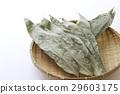 조릿대 잎, 조릿대, 잎 29603175