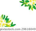 플루메리아, 꽃, 플라워 29616049
