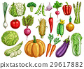 Vegetables isolated sketch set with fresh veggies 29617882