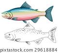 动物 着色 轮廓 29618884
