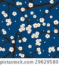 Plum Blossom Flower on Indigo Blue Background 29629580