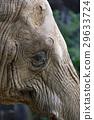大象 動物 動物園 29633724