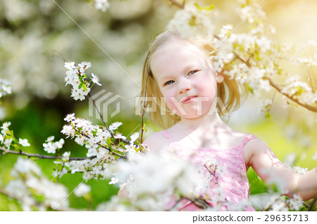 Adorable little girl in blooming cherry garden 29635713