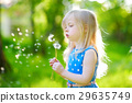 Pretty little blonde girl blowing off a dandelion 29635749