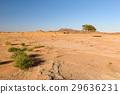沙漠 樹木 樹 29636231