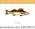 สีน้ำ,ปลา,เวกเตอร์ 29638654