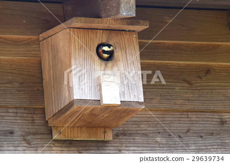 varied tit, birdhouse, nest box 29639734