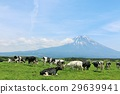 富士山と青空の牧場風景 29639941