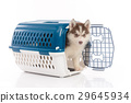 siberian husky puppy in travel box o 29645934