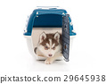 siberian husky puppy in travel box o 29645938