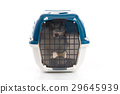 siberian husky puppy in travel box o 29645939