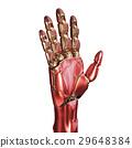 robot, hand, artificial 29648384