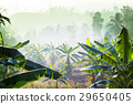 agriculture, east, grass 29650405