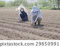 ผู้หญิงในฟาร์ม 29650991