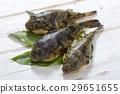 河豚 河豚魚 魚 29651655
