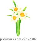 出生花·1月·水仙花 29652302
