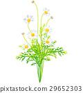 出生花·二月·瑪格麗特 29652303