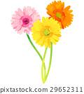 出生花·十月·非洲菊 29652311