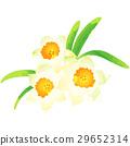 出生花·1月·水仙花 29652314