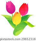 탄생 꽃 3 월 튤립 29652316