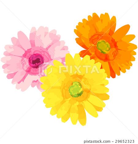 出生花·十月·非洲菊 29652323