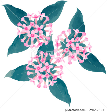 Birth flower · November · Boudalia 29652324