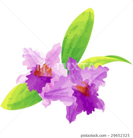 생일 꽃 12 월 · 카틀레야 29652325