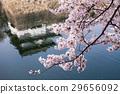 大阪城 樱花 樱桃树 29656092