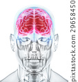 Human Internal Organic - Brain. 29658450