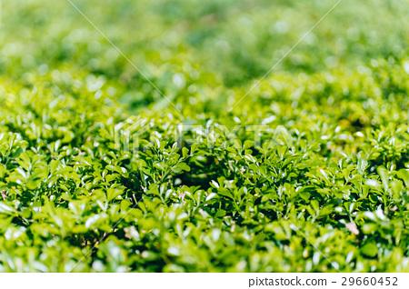 花圃,植物,花園,公園,Flower beds 29660452