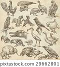 Birds around the World. Hand drawn full sized pack 29662801