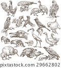 Birds around the World. Hand drawn full sized pack 29662802